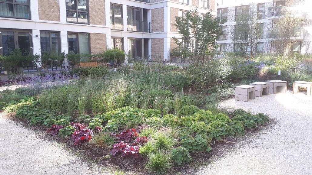 Ecologisch en innovatief dak - Schadenberg Stedegroen