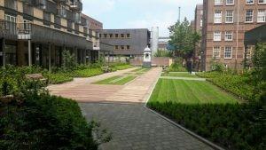 Onderhoud vegetatiedaken - Schadenberg Dakwerken