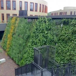 Verticale tuin Arcus College Heerlen - Schadenberg Stedegroen